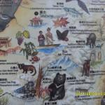 台灣動物地圖